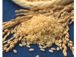 玄米食のメリット・デメリット!栄養素やおすすめの食べ方は?