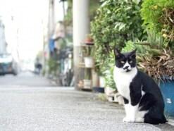 猫が来ない庭、猫の糞尿被害対策
