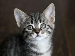 猫が帰ってこない?その理由や迷い猫を探す方法を解説