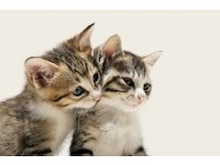 猫と一緒に寝るときの注意点は?一緒に寝たい猫BEST5!