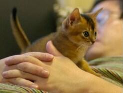 一緒に寝たい猫BEST5!猫と寝るときの注意点は?