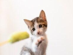 猫に好かれる人になるための3つのポイント