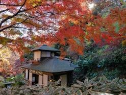 横浜・三溪園の紅葉2019年!見頃や楽しみ方、混雑回避術