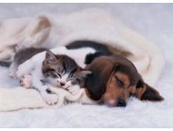 ペット保険はどこまで補償される?ペット保険の基礎を学ぶ