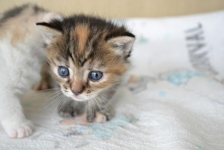 子猫の1日のトイレ回数の目安