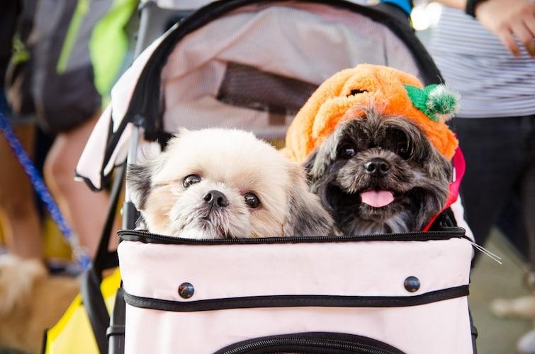 犬用バギーはワンちゃんへの負担が少なめ