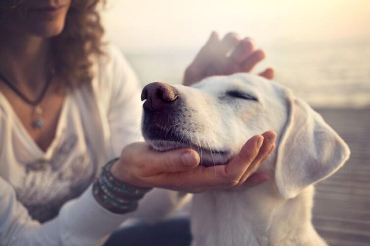 犬用サプリメント選び方