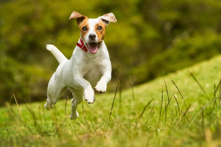 犬用サプリメントの保存方法