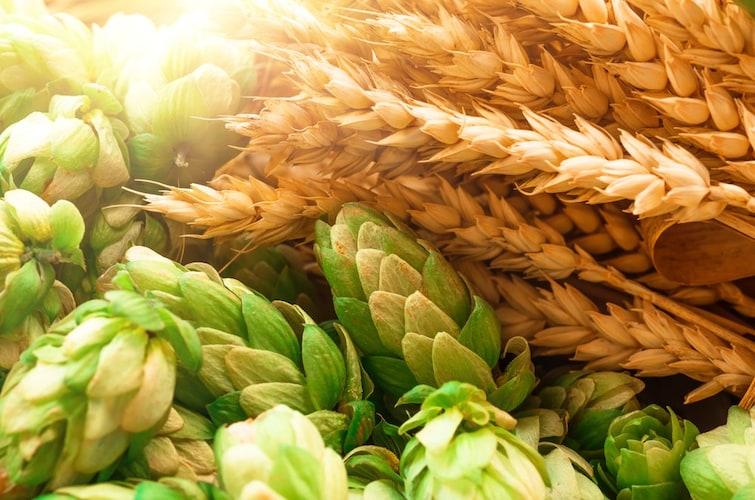 原材料 | 麦芽は美味しさを左右するポイント