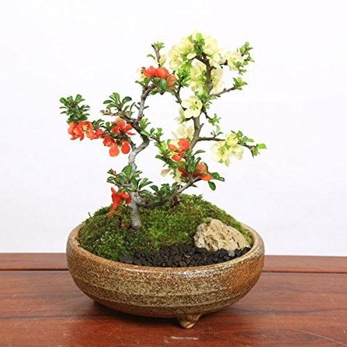 鉢のサイズ|植物の大きさに合った形と深さのあるものを