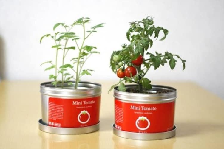 種類 手入れが必要な「土耕栽培」室内で育てやすい「水耕栽培」