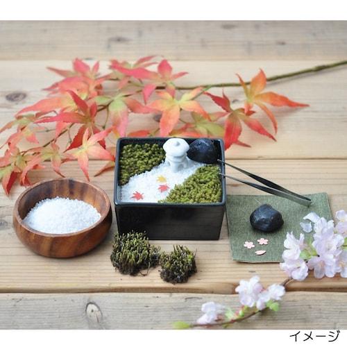 苔リウム|高い湿度が必要な種類が育てやすい