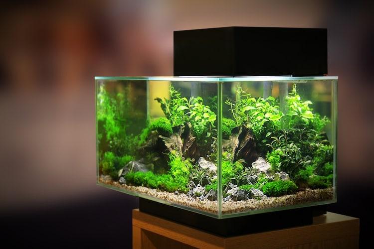 サイズ|最もコスパが良く、水質維持がしやすい60cm水槽がオススメ