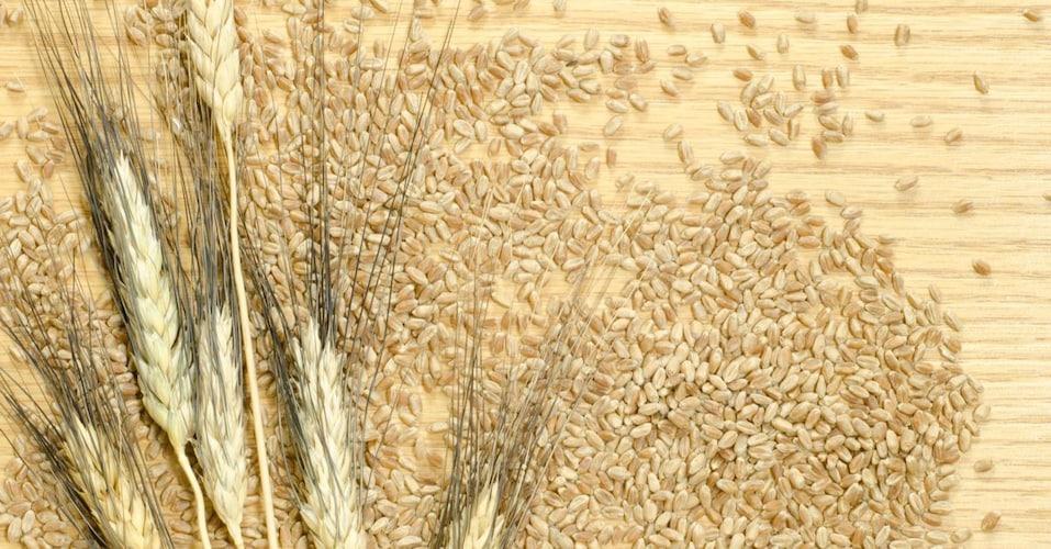 オーソドックスな『六条大麦』