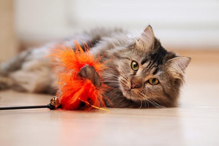 【猫用おもちゃの選び方4】子猫は噛めるものがおすすめ