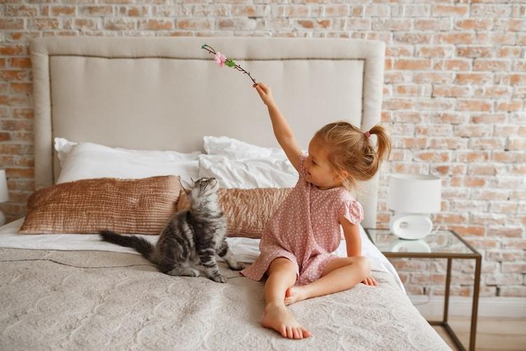 飼い主さんと子猫のコミュニケーションを増やす