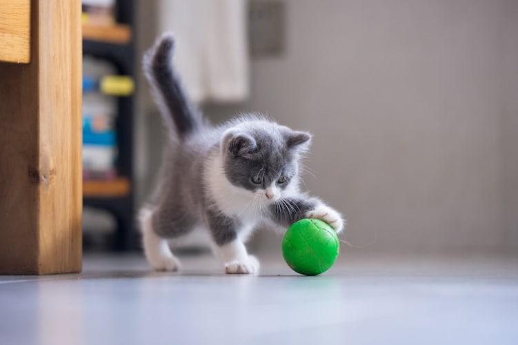 ボール 転がり出したら止まらない!