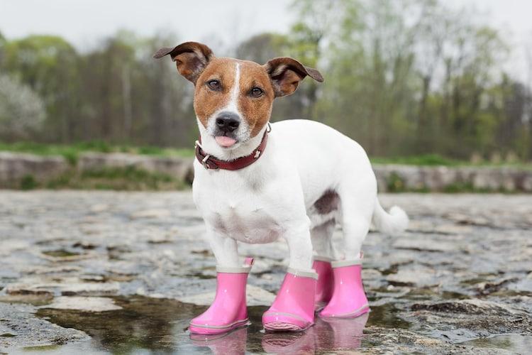 炎天下や気候が荒れている中を散歩をするとき