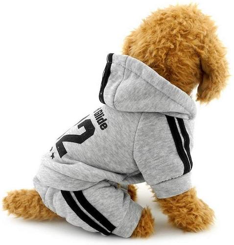 小型犬にはフィットしたサイズの洋服を