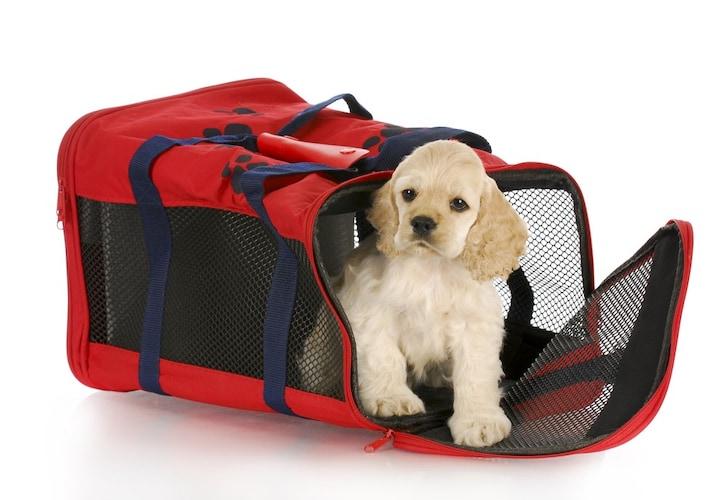 犬用キャリーバッグの使い方~嫌がるときはご褒美を活用して~