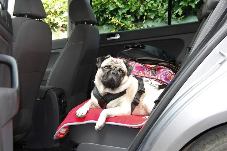 乗車時は車のドアを閉めてからリードを外す
