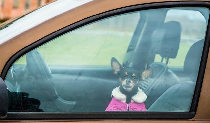 車内での留守番は厳禁!熱中症や低体温症の危険も