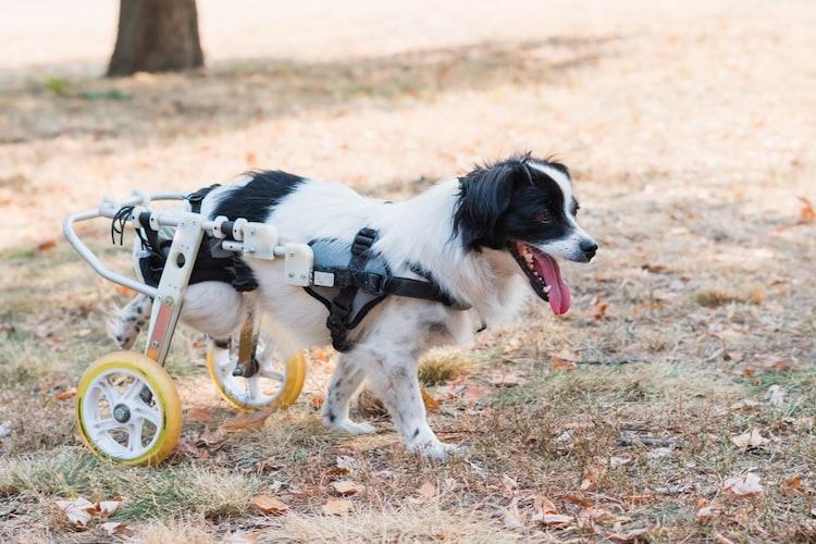 犬の年齢|成犬は耐久性重視、老犬には軽めのものを