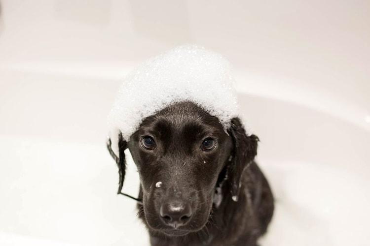 犬用のシャンプーは必要?