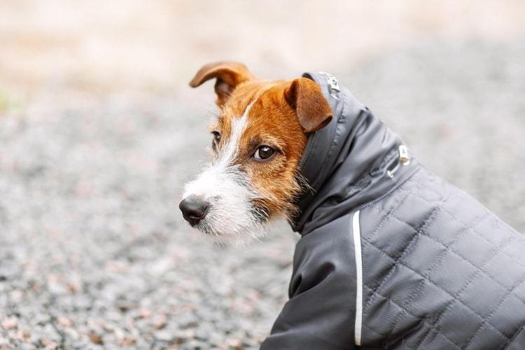 犬用レインコートの必要性は?