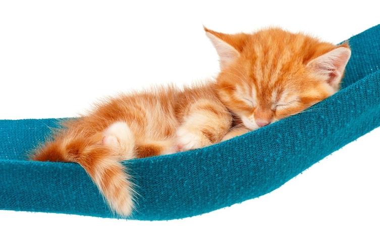 猫用ハンモックは落ち着ける上に寒さ対策にも