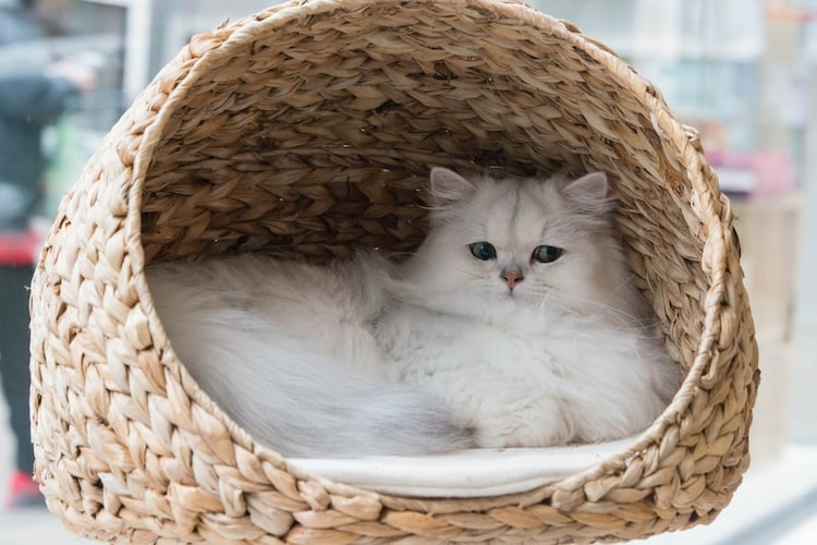猫用ハウスやベッドを使わないときは置き場やにおいを変えてみて