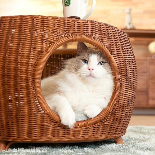 ドーム型・ハウス型|狭いところや暗いところが好きな猫ちゃんに