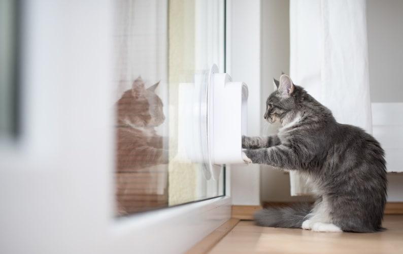 猫ドアを通らないときは遊びながら慣れさせるのもおすすめ