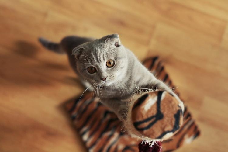 種類|愛猫の様子を見て研ぎやすさを確認、傷対策タイプも