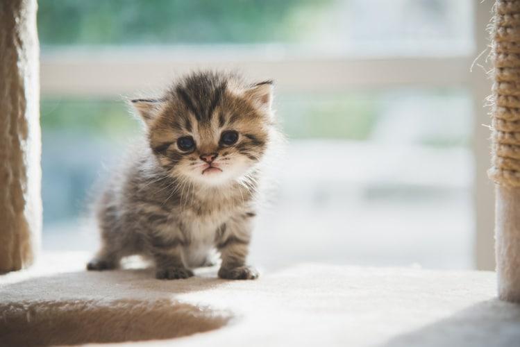 子猫の首輪は骨格がしっかりしてからがおすすめ