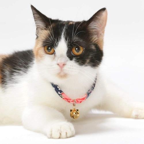 素材 柔らかいもので猫のストレスを軽減