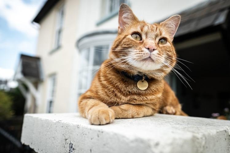 猫の首輪が汚れたら優しく手洗い、ひどいときは新調を