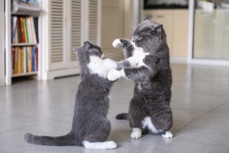 猫ちゃん同士の相性が良くない場合は1匹用も検討を