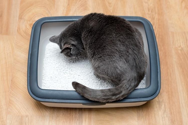 猫用トイレの種類