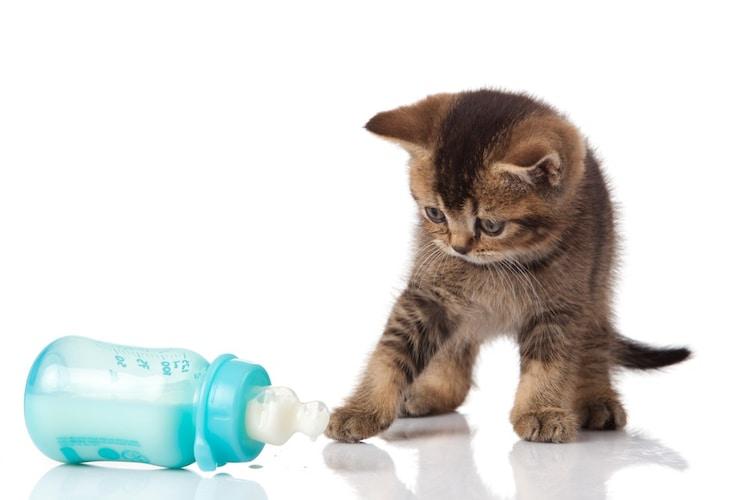 対処法1|哺乳瓶の口のサイズをチェック