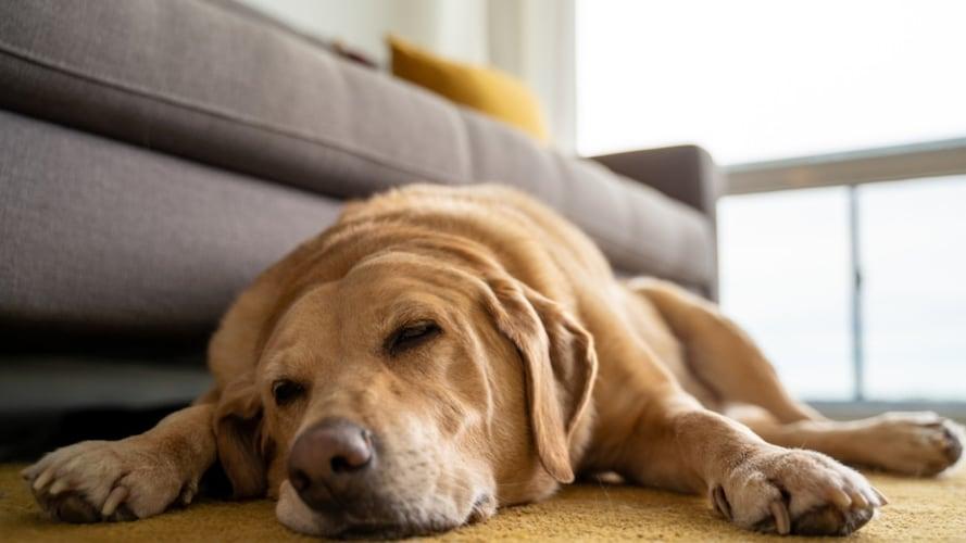 犬用コルクマットを食べたときの対処法