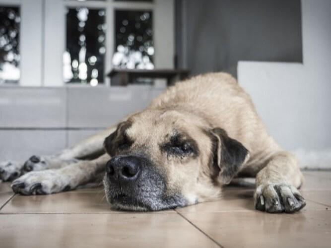 ・老犬には滑り止めが付いたズレにくいものがおすすめ