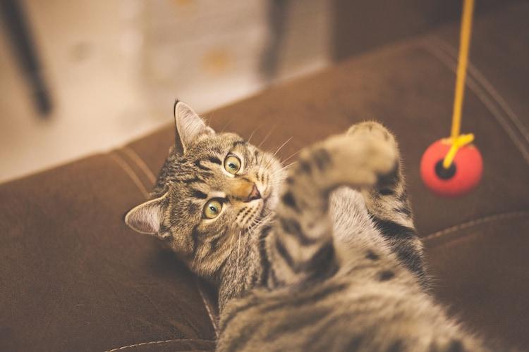 猫用おもちゃで室内飼いの運動不足やストレスを解消!