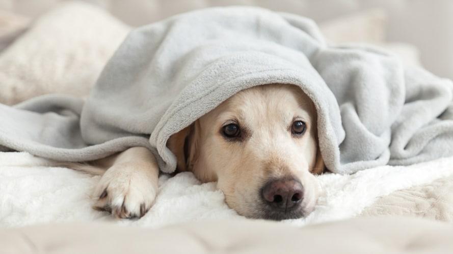 犬用ケージカバーの代用品