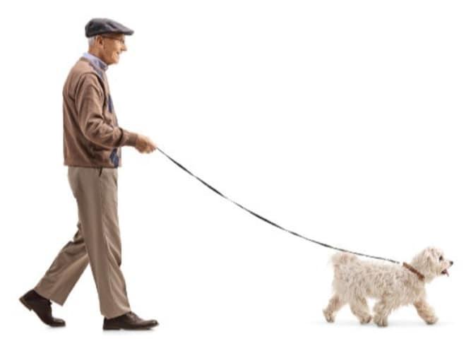 ・中型犬や小型犬は性格や大きさに見合ったものを
