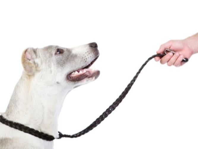 ・大型犬には耐久性があるものや太いリードがおすすめ