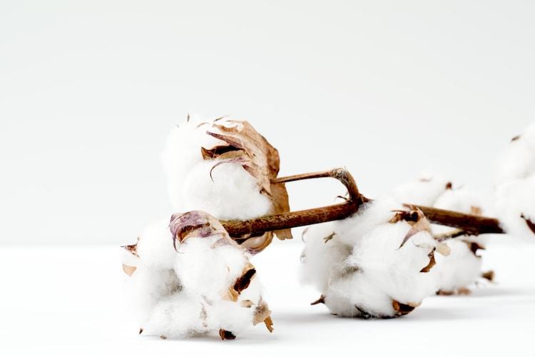 素材|中綿素材と側素材をチェック!