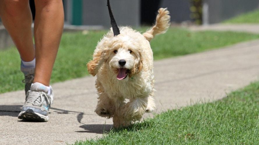 犬の散歩はなぜ必要なの?
