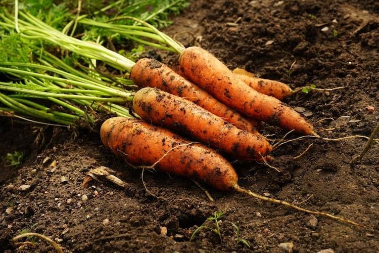 原料 有機農法など栽培方法にこだわるのも◎
