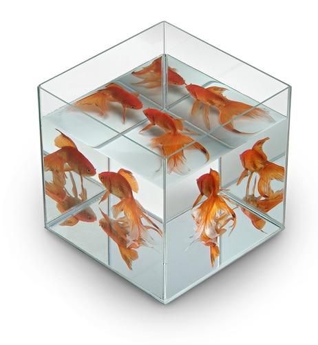キューブ水槽|水質が安定しやすい水槽